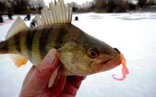 Зимняя рыбалка на силиконовые приманки