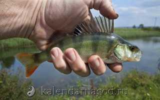 Календарь клева рыбы в мае: Календарь рыболова — МАЙ 2018