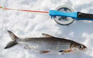 Ловля сига зимой