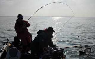 Ловля осенью на живца: как поймать щуку, окуня и судака на живца