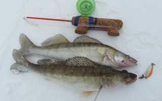 Хитрости зимней рыбалки: ночной лов судака, ловля линя со льда, ищем стоянки рыбы зимой