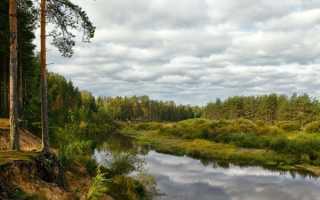 Медведица (Тверская область)