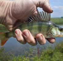 Гид по самым рыбным местам Челябинской области