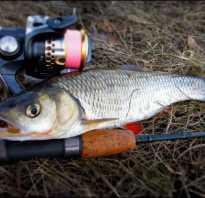 Особенности рыбалки на жереха при ловле на спиннинг