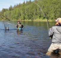 Особенности рыбалки в Омской области – виды рыб и уловистые места
