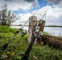 Майская рыбалка: какую рыбу ловят в мае