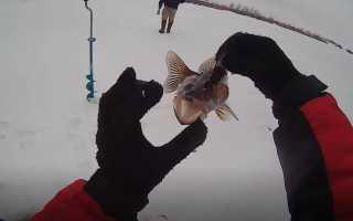 Ловля судака в декабре