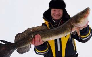 Однодневная подлёдная рыбалка на Онежском озере